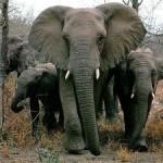 National Elephant Appreciation Day- Sept. 22